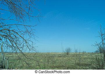 táj, közül, mező, noha, száraz, fű