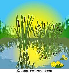 táj, noha, tavacska, fű, bulrush, napkelte, alatt, víz