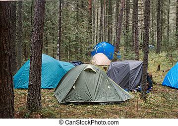 Skog, tält. Eld, forest., förgrund, två, tält.