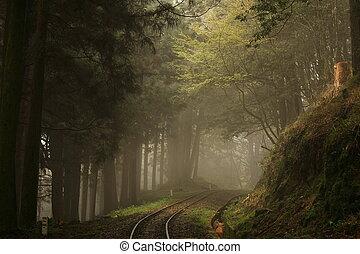 tåge, ind, den, skov, hos, træer