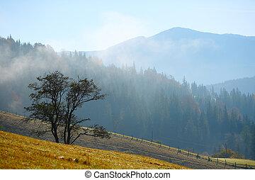 tågede, formiddag, ind, bjerge