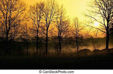 tågede, solopgang