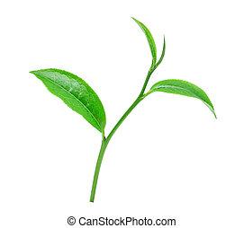 tè verde, foglia, con, gocce, di, acqua, bianco, fondo.