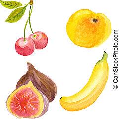 técnica, damasco, mão, aquarela, cerejas, figos, banana., desenhado
