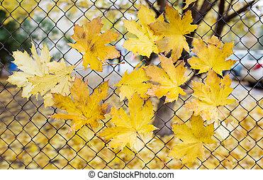 télégraphier clôture, feuilles, automne, baissé, attrapé