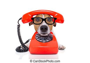 téléphone, chien