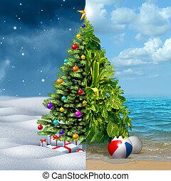 tél, és, tropikus, karácsony