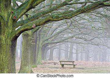 tél, ősz, bukás, ködös, táj, közül, erdő, és, sugárút, közül, bitófák