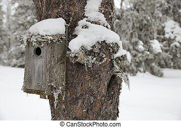 tél, birdhouse