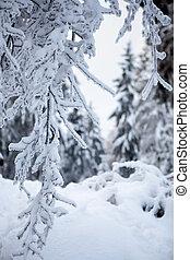 tél, erdő, alatt, hegyek