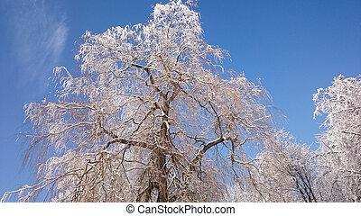 tél fa, alatt, hegyek, befedett, noha, friss hó