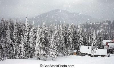 tél, hóvihar, hóvihar, fenyő, tre