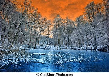 tél, látványos, felett, napnyugta, erdő, narancs
