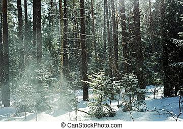 tél, nap