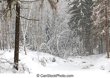 tél parkosít, alatt, hó, erdő