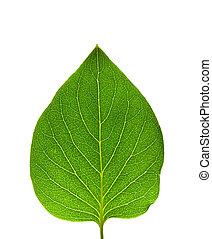 tényleges, levél növényen