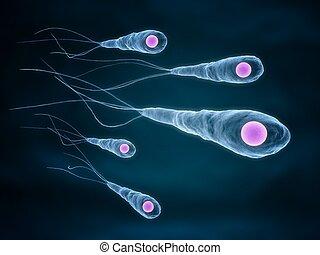 tétano, bacterias