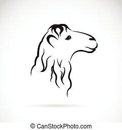 tête, chameau, image, vecteur, fond, blanc