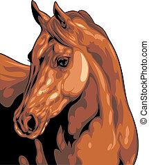 tête, cheval