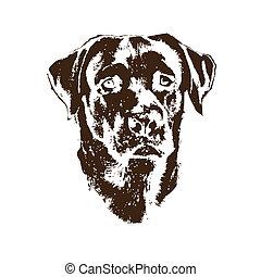 tête, chien, retriever labrador