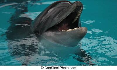 tête, closeup, dauphins