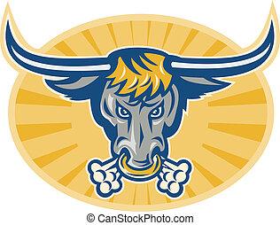tête, fâché, taureau, devant, longhorn, texas