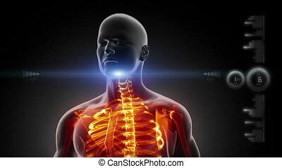tête, humain, balayage, monde médical