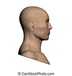 tête humaine, -, vue côté