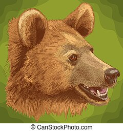 tête, illustration, ours, gravure