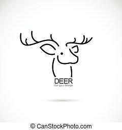 tête, image, cerf, vecteur, conception, fond, blanc