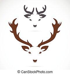 tête, image, cerf, vecteur, fond, blanc
