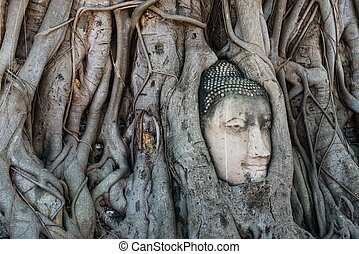 tête, mahathat, arbre, bouddha, statue, wat, temple, racines