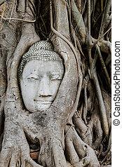 tête, mahathat, arbre, bouddha, wat, coffre