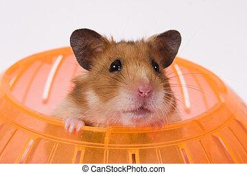 tête, sien, balle, hamster, sauter, dehors