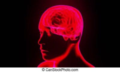 tête, tourner, cerveau, 4k, hologramme, boucle