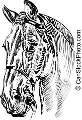 tête, vecteur, cheval, -