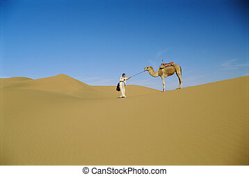 têtu, homme, désert, chameau