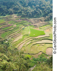 típico, arroz verde, terrazas, en, el, filipinas