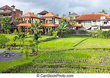 típico, balinés, casas, inbetween, el, arrozales, en, bali, indonesia, asia