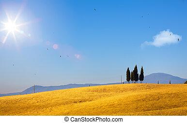 típico, tuscany, campo, landscape;, pôr do sol, sobre, colinas rolantes, e, tuscany, terra cultivada