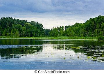 tó, és, erdő, nézet.