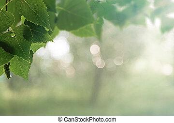 tôt, beauté naturelle, résumé, arrière-plans, matin, forest., bokeh