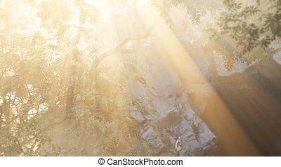 tôt, brumeux, forêt, matin