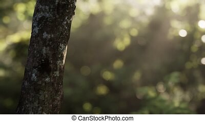 tôt, brumeux, matin, forêt