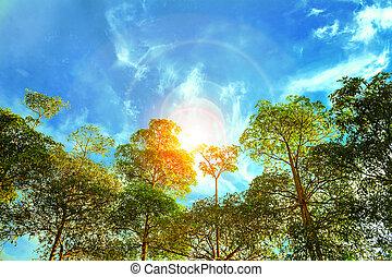 tôt, ensoleillé, forêt, matin