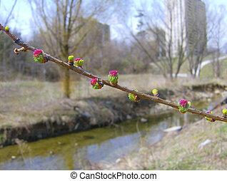tôt, fleur source, arbre, fleurir