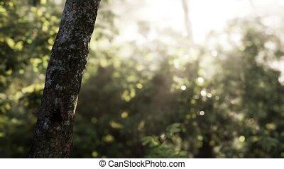 tôt, forêt, brumeux, matin