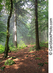 tôt, forêt, matin