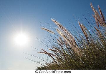 tôt, herbes, soleil, sauvage, matin