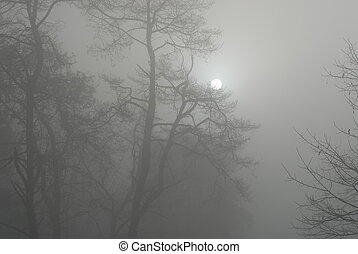 tôt, hiver, matin